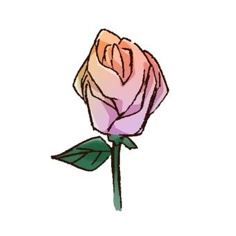 虹色の薔薇
