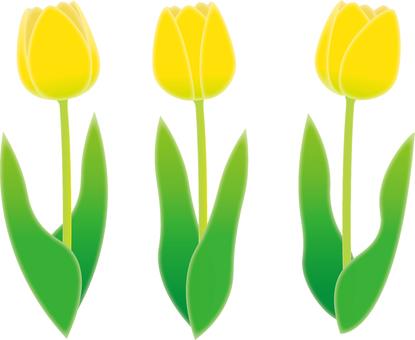 튤립 (노랑)