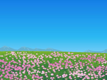 Field of flower of grass plain grassland scenery 01