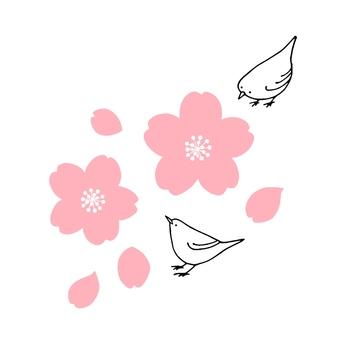 Cherry blossoms and mezzo