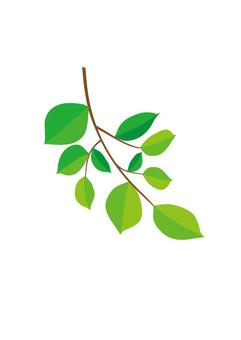 녹색 나뭇 가지