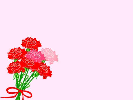 Carnation 3 with pink background