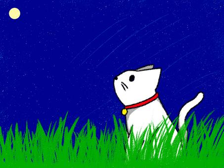 밤하늘 올려다 고양이