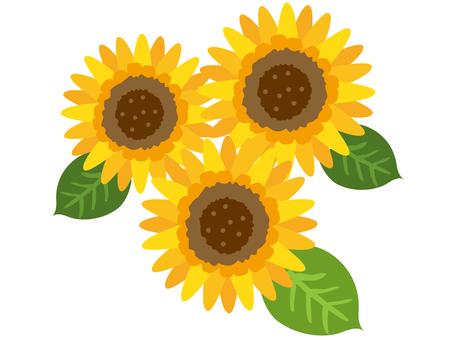 Sunflower _ 2