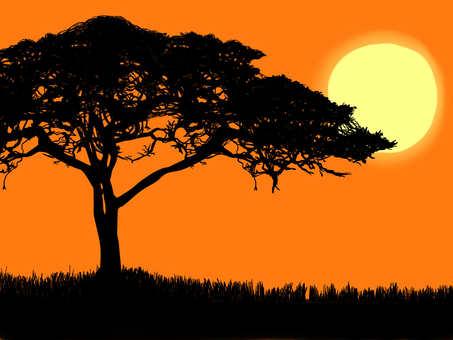 황혼의 나무