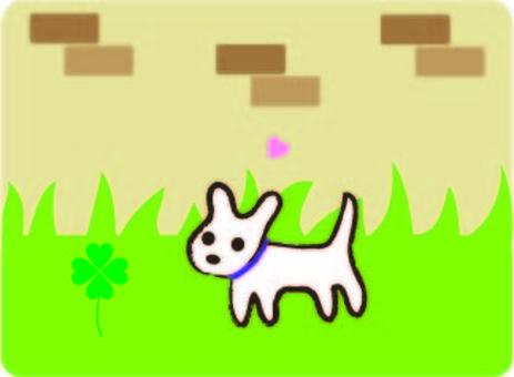 Clover found white dog