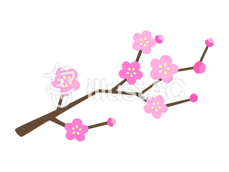 梅の枝のイラスト