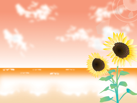 Sea _ Sunflower _ sunset