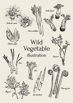 Wild vegetables illustration