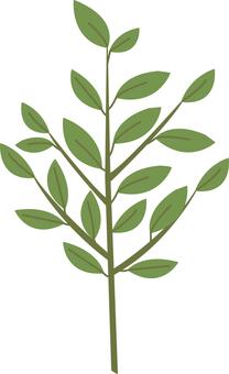 【Plant】 Sakaki