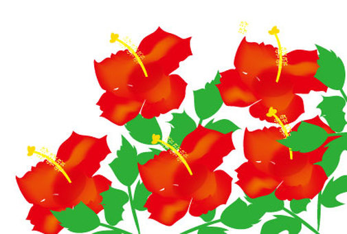 Illustration of a red flower in summer Hibiscus