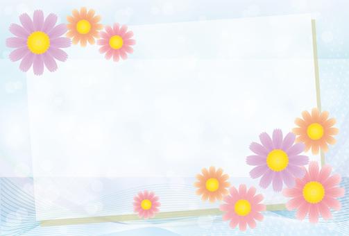 波斯菊秋季櫻桃非洲菊