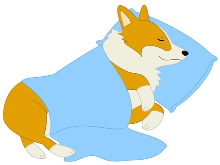 Corgi bedding blue