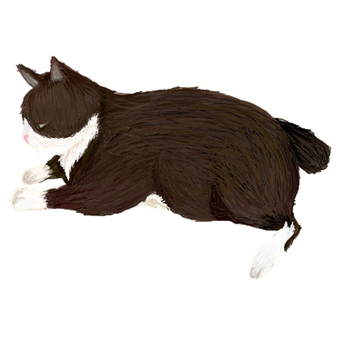 흑백 고양이