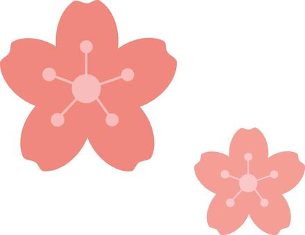 벚꽃의 꽃잎 2