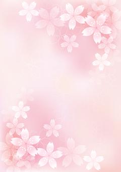 벚꽃의 꽃 19