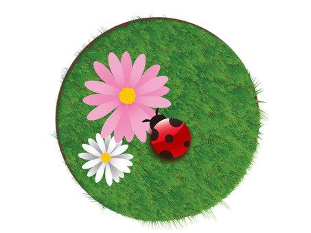 Ladybird and flowers