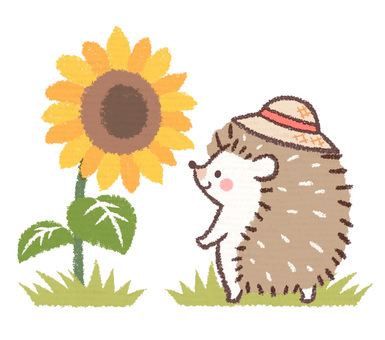Hedgehog straw hat and sunflower