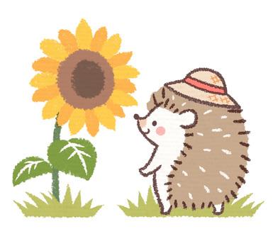 刺猬草帽和向日葵