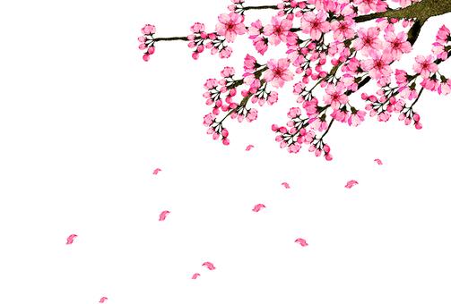 벚꽃 6 위