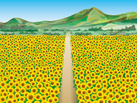 Sunflower field (8) Mountain and one road