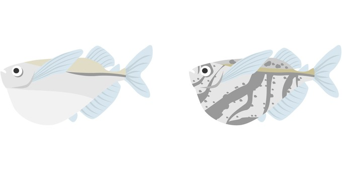 Two types of tropical fish hatchet