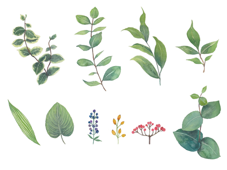 Set of simple plants and flowers