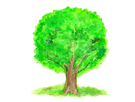 Fresh green tree (watercolor)