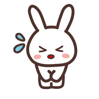 Rabbit_sorry_no background