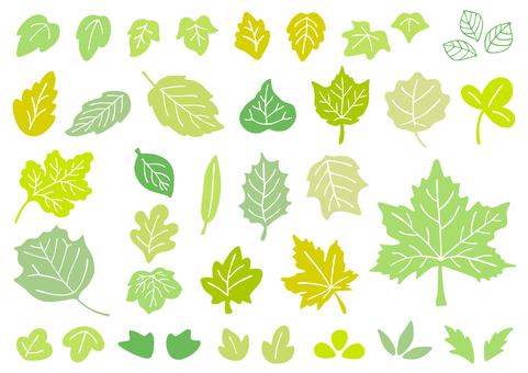 Leaf set 2