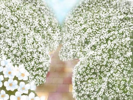 Beyond the path of Yukiyanagi