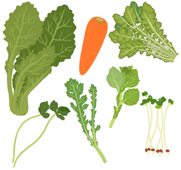 Vegetables (green and yellow vegetables) 4/4 * Borderless