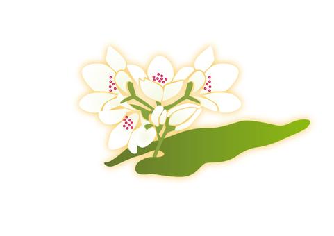 Soba flower 2