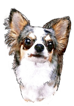 Dog's portrait 4