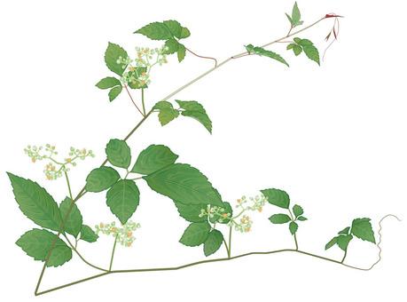 Cayenne / weeds