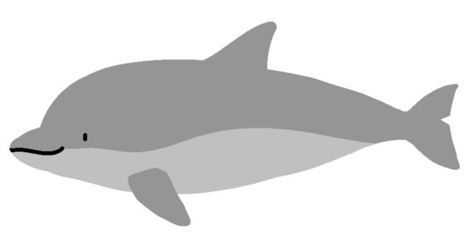 Kobitoto dolphin