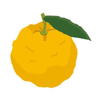 유자 (잎 포함)