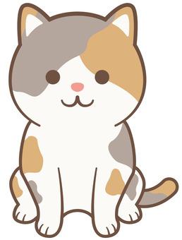 Mikane cat