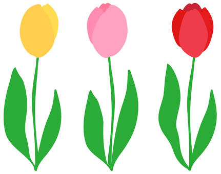 Three color tulips
