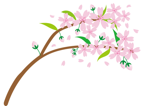 h28 Sakura material 25