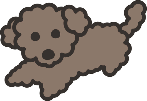 Toy poodle 03