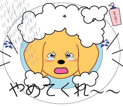 Shampoo unpleasant doggy