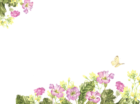 Letter background - Nanohana and Primula