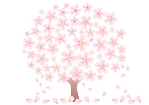 벚꽃 나무와 벚꽃 눈보라