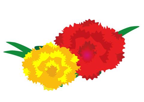 Carnation light color