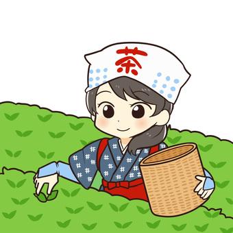 A woman picking tea