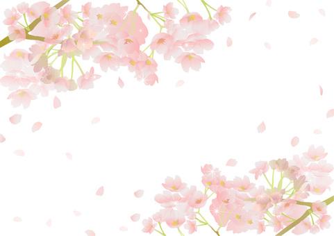벚꽃의 프레임 45
