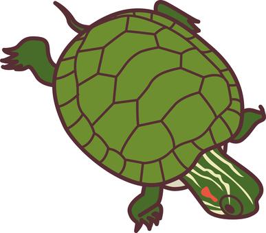 138 Turtle 1