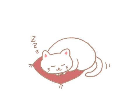 A cat to take a nap