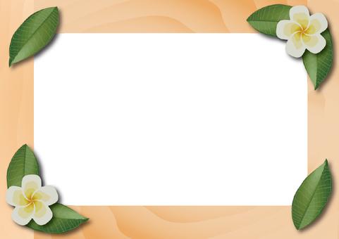 Plumeria frame